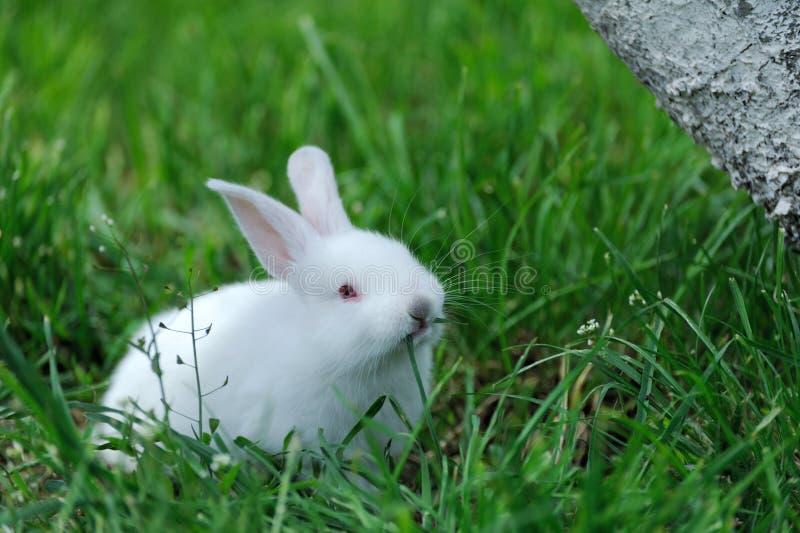Download Petit lapin sur le champ photo stock. Image du beau, espiègle - 87707806