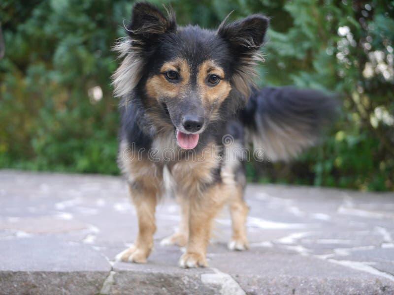 Petit, mignon chien photos libres de droits