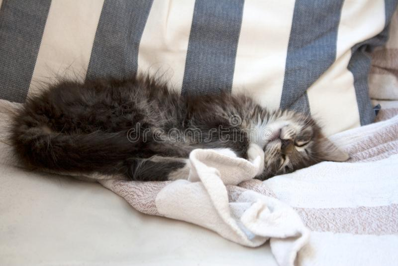 Petit minou tigré dormant sur une chaise photos libres de droits