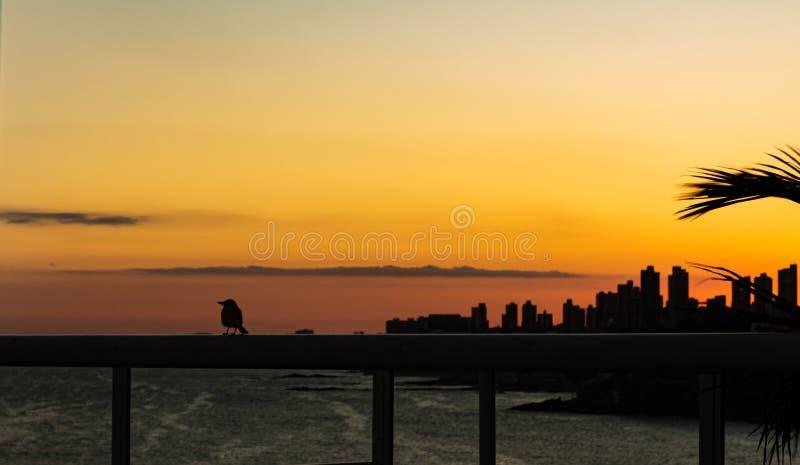 Petit oiseau été perché sur la balustrade, pendant un beau coucher du soleil dans la ville de Salvador du Bahia dans le nord-est  photographie stock libre de droits