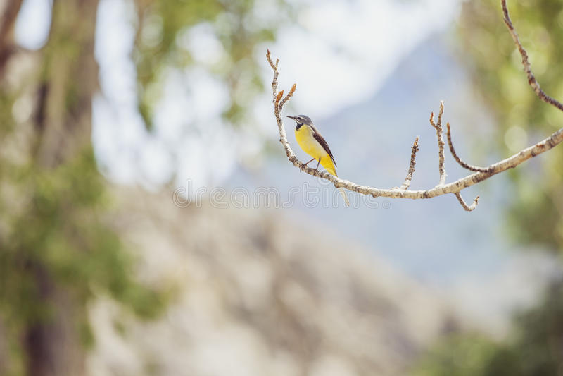 Petit oiseau photo libre de droits