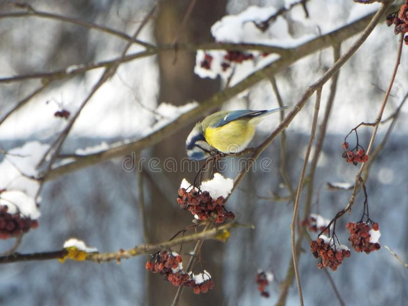 Petit oiseau image stock