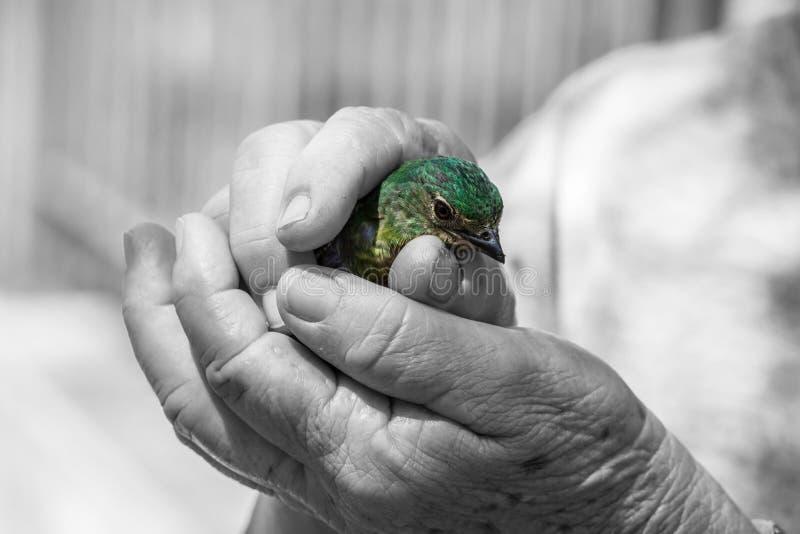 Petit oiseau photos libres de droits