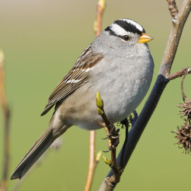 Petit oiseau de moineau photographie stock libre de droits