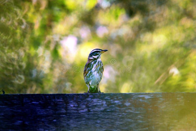 Petit oiseau pendant l'été photo stock