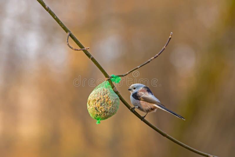 Petit oiseau sur la branche photographie stock libre de droits
