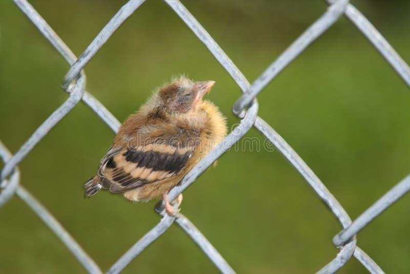 Petit oiseau sur la frontière de sécurité images stock