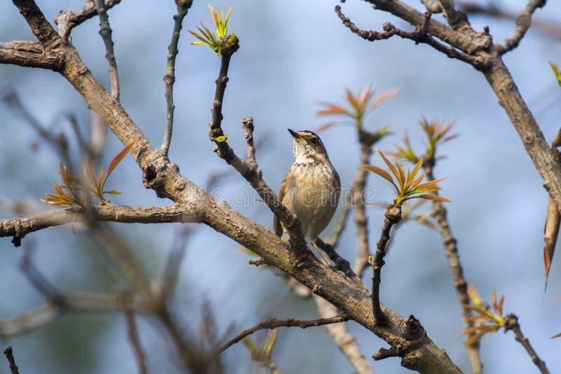 Petit oiseau sur un arbre avec le beau ciel bleu image libre de droits
