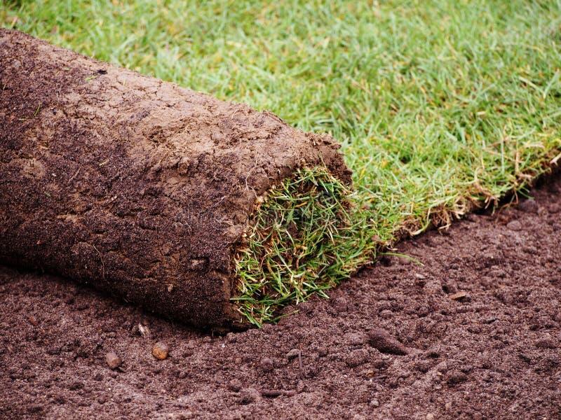 Petit pain d'herbe de gazon photographie stock libre de droits