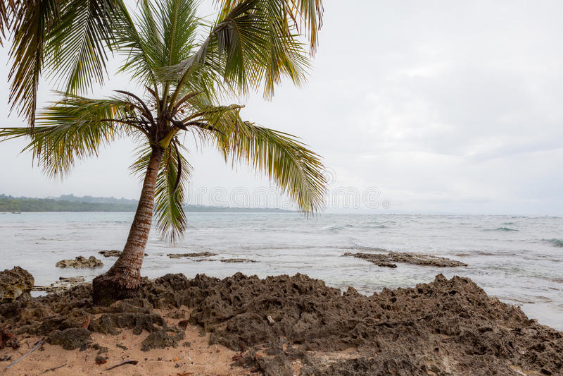 Petit palmier en plage rocheuse photos libres de droits