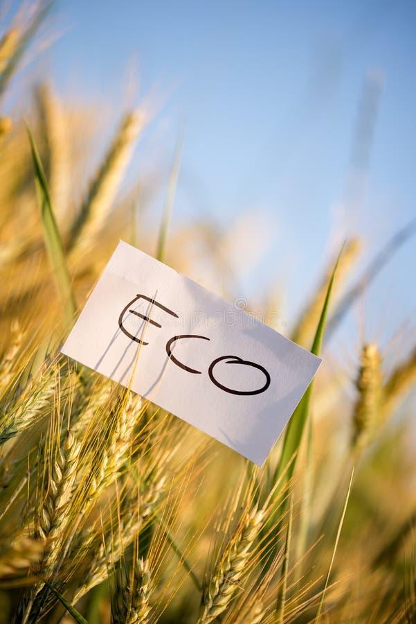 Petit papier avec le message d'Eco sur les usines entières de grain photographie stock libre de droits