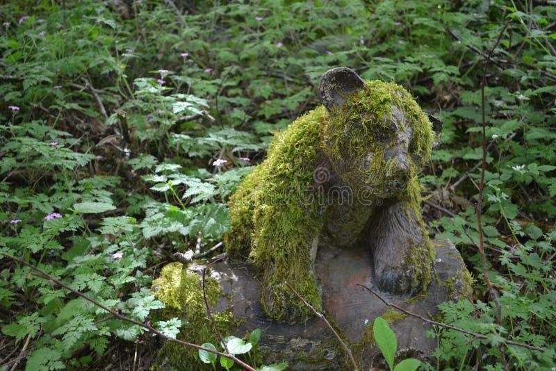 Petit petit animal d'ours moussu mignon photos libres de droits
