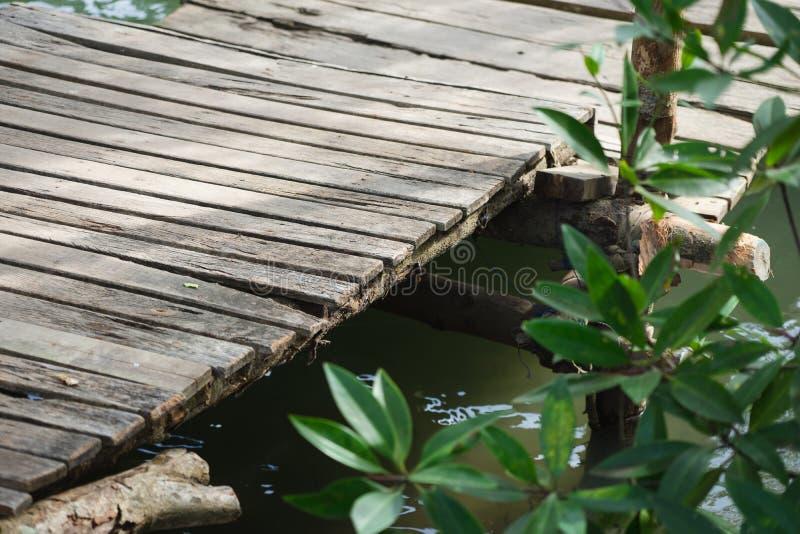 Petit Pier Going à la forêt de palétuvier, le regardant et lui donnant la paix et la relaxation est un endroit à détendre Et est photos stock