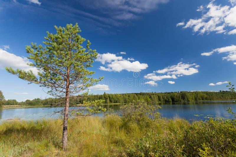 Download Petit pin près de lac image stock. Image du lakeside - 56486491
