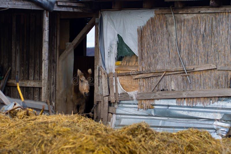 Petit poney photo stock