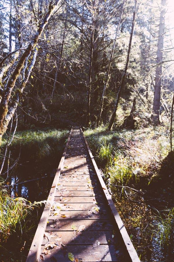 Petit pont étroit en bois dans une forêt au-dessus d'une petite rivière photos libres de droits
