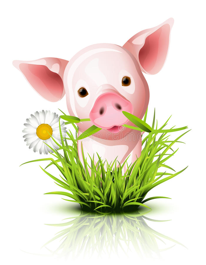 Petit porc rose dans l'herbe illustration libre de droits
