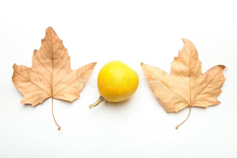 Petit potiron jaune photos stock
