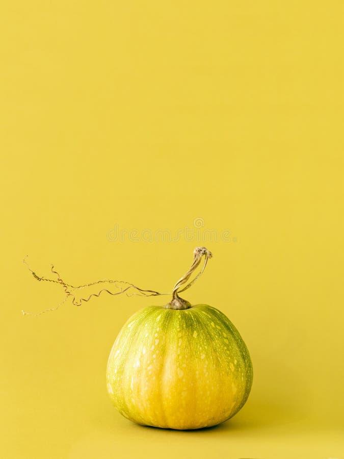 Petit potiron jaune lumineux photos stock