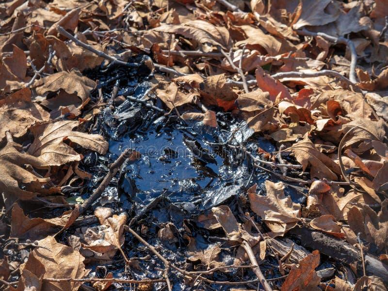 Petit puits de goudron entouré par des feuilles, des brindilles, et l'extérieur de saleté photos stock