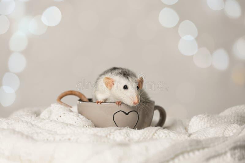 Petit rat en tasse sur une couverture tricotée. Symbole chinois de nouvelle ann?e photo stock