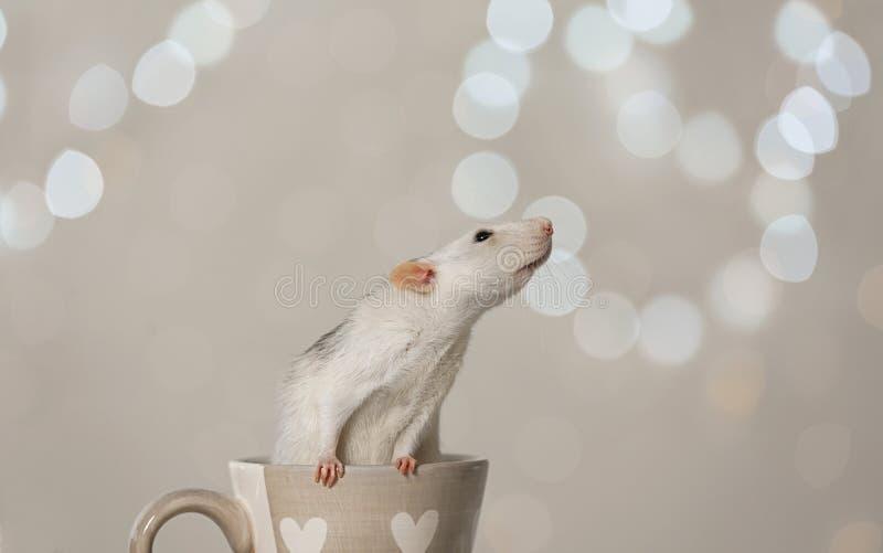 Petit rat en tasse. Symbole chinois de nouvelle ann?e photographie stock