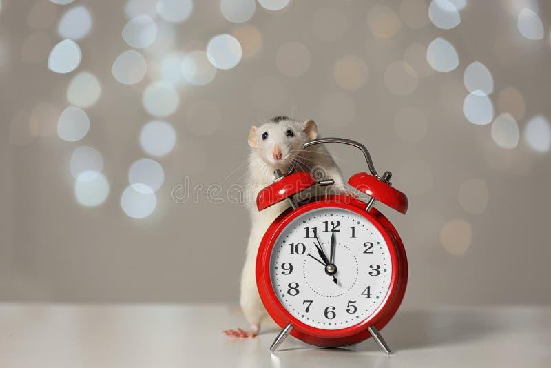Petit rat et réveil. Symbole chinois de nouvelle ann?e photographie stock libre de droits