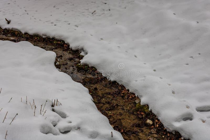 Petit ressort d'eau faisant la voie par le champ neigeux image libre de droits
