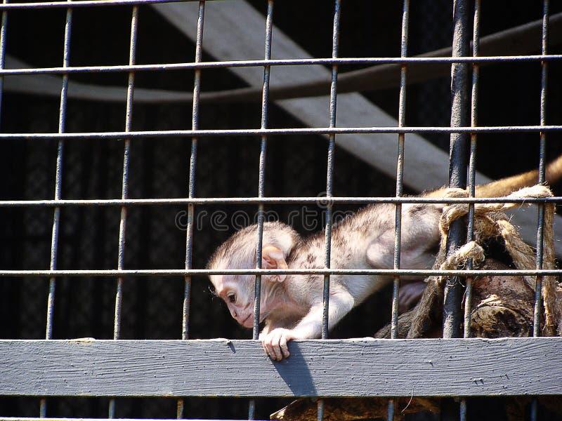 Petit singe mignon clibbing au zoo images stock