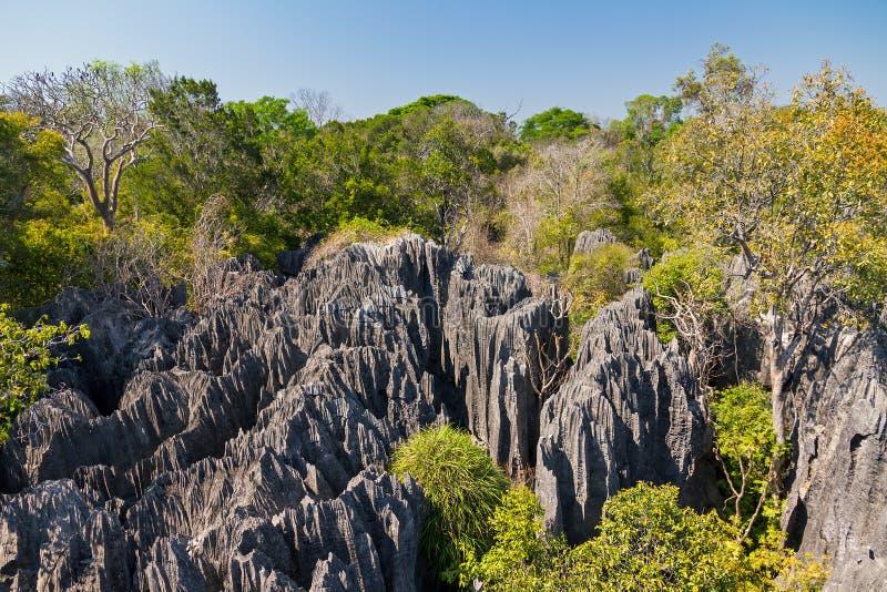 Petit Tsingy de Bemaraha 免版税图库摄影