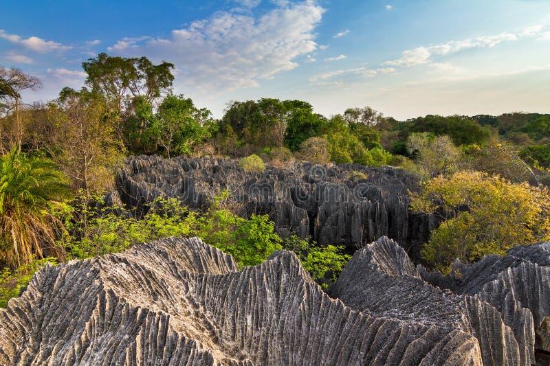 Petit Tsingy Madagascar stock afbeeldingen