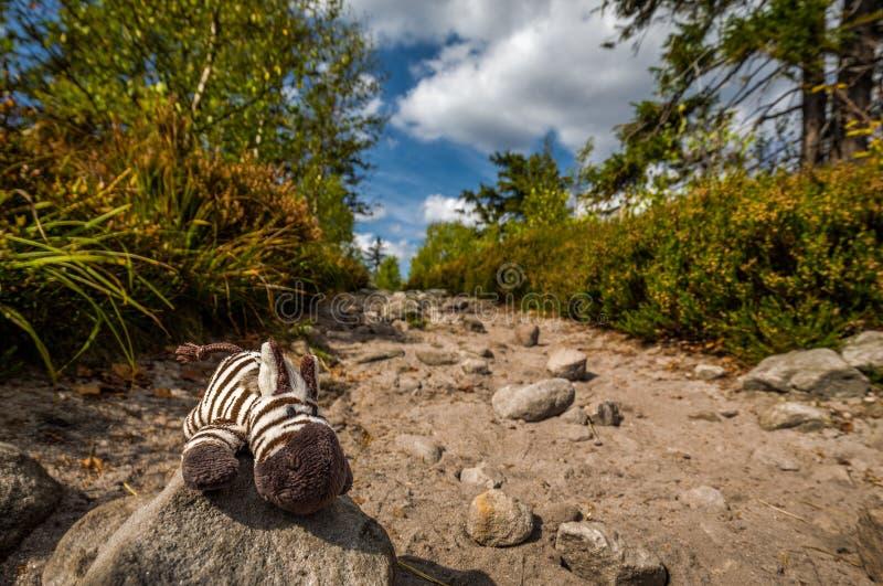 Petit zèbre bourré mignon de jouet se trouvant sur le sentier piéton dans la forêt verte dans Szczeliniec Wielki photos stock