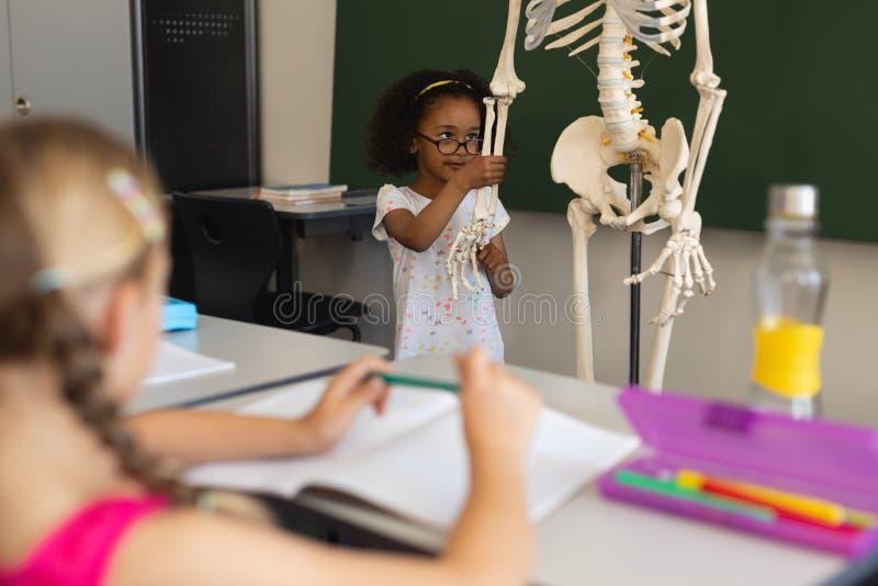 Petite écolière expliquant le modèle squelettique humain dans la salle de classe photographie stock libre de droits