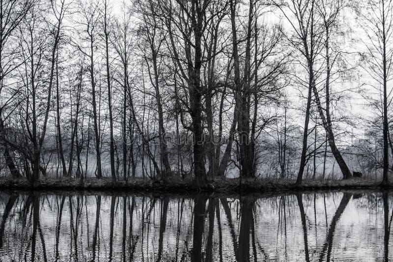 Petite île avec des arbres au milieu du lac image libre de droits