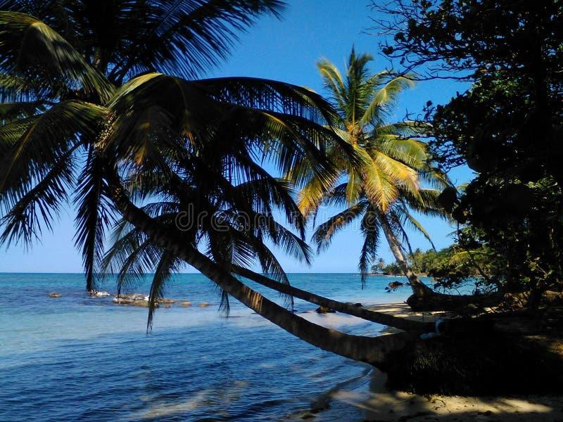 Petite île de maïs photos stock