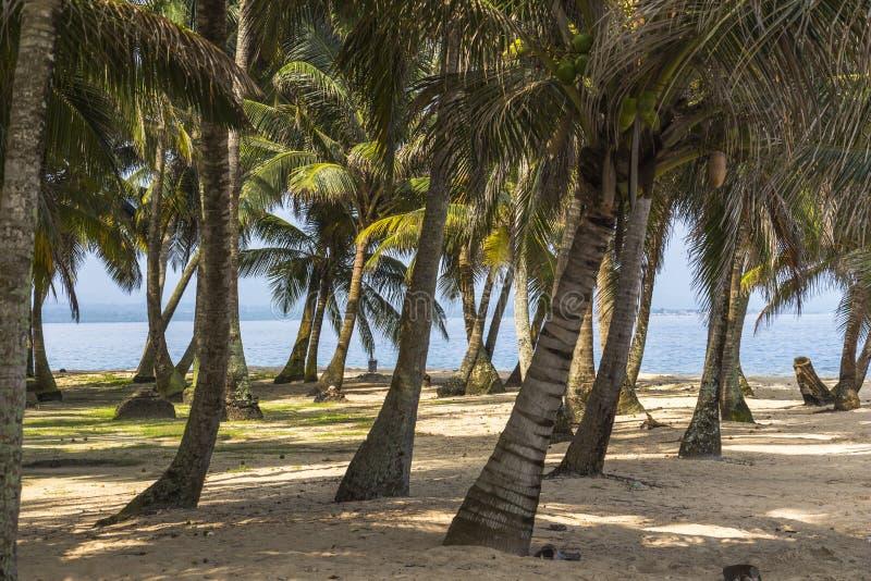 Petite île des Caraïbes l'explorant, San Blas Islands photos libres de droits