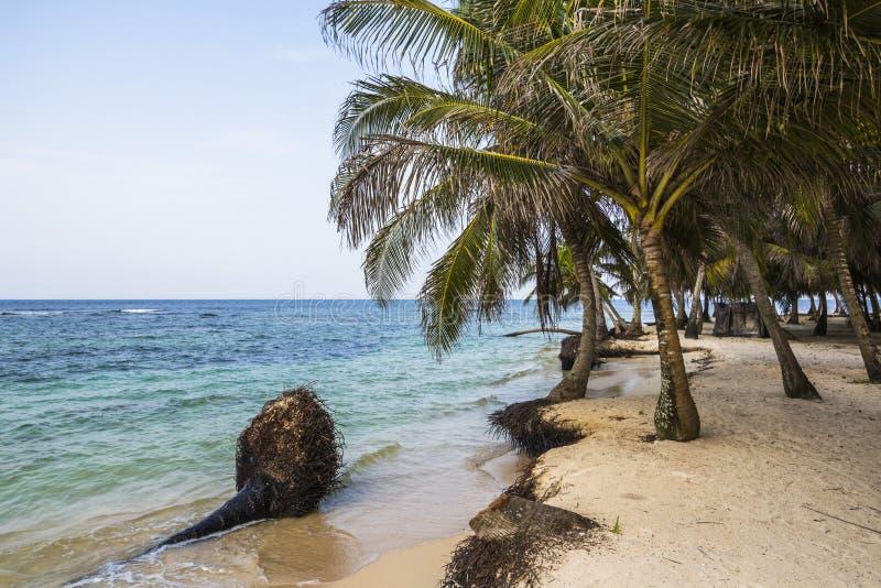 Petite île des Caraïbes l'explorant, San Blas Islands photo stock