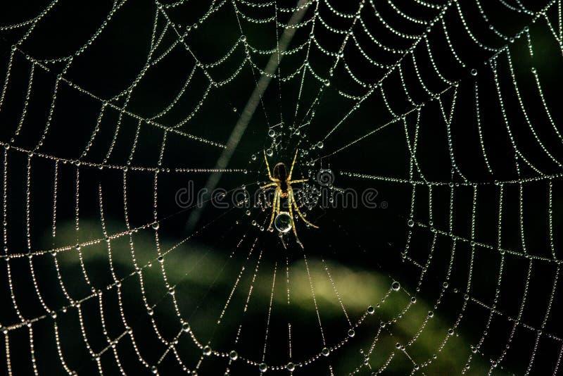 Petite araignée au centre du Web couvert de baisses de brouillard images libres de droits