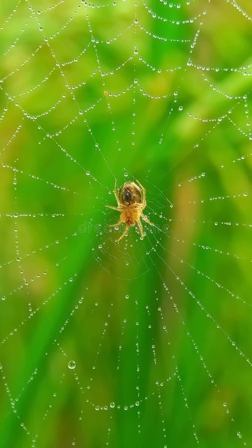Petite araign?e photo libre de droits