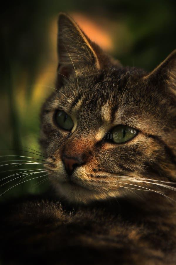 Petite bête de chat image stock