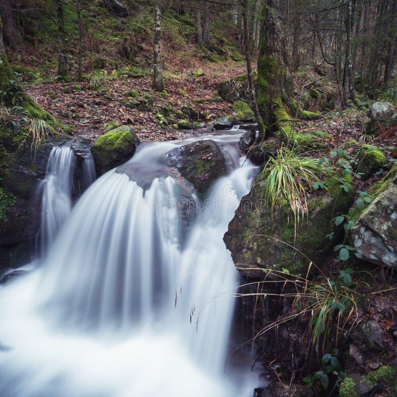 Petite cascade dans la forêt noire images libres de droits