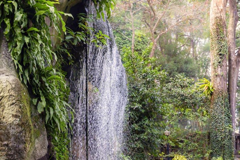 Petite cascade dans une for?t tropicale photo libre de droits