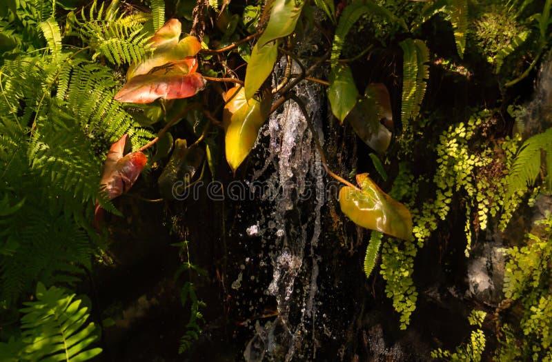 Petite cascade tropicale avec la fougère et les couleurs gentilles photos libres de droits
