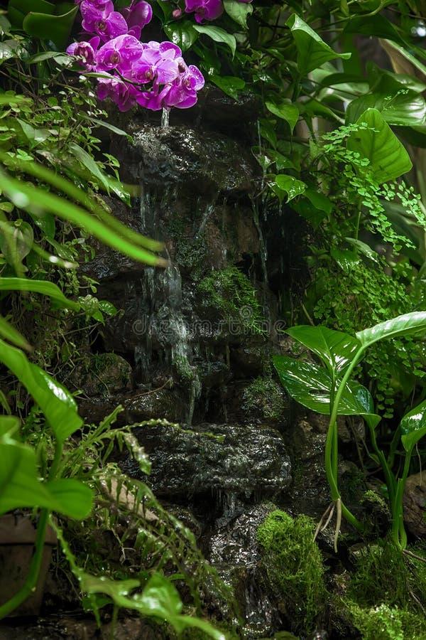 Petite cascade tropicale parmi les plantes vertes et les fleurs images stock