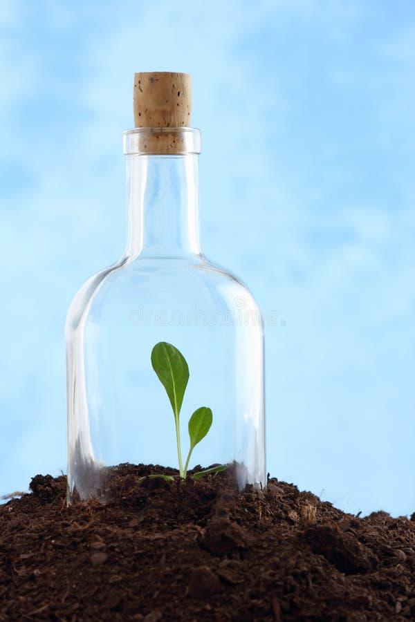 Petite centrale dans la saleté à l'intérieur de la bouteille en verre photos libres de droits