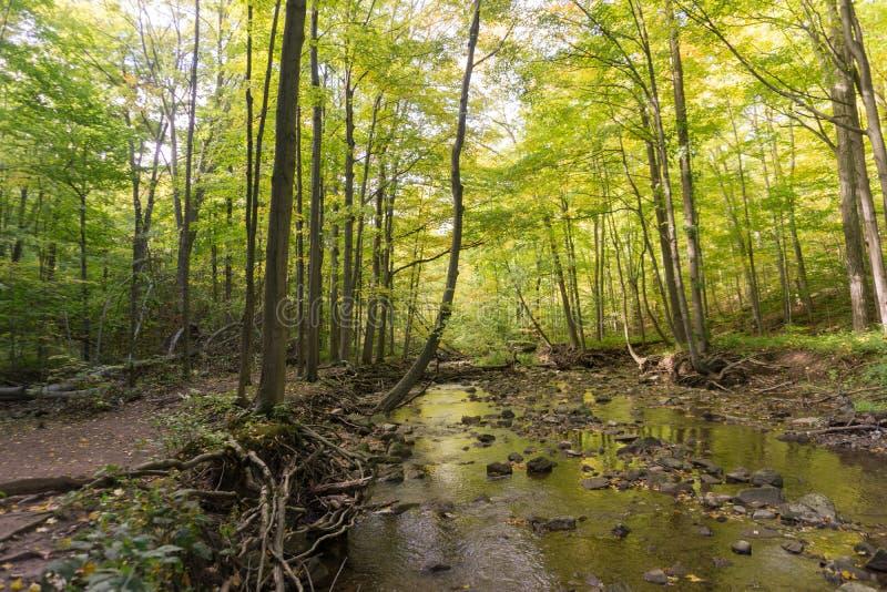 Petite crique claire fonctionnant dans les bois à la traînée de Bruce dans Ontar image libre de droits