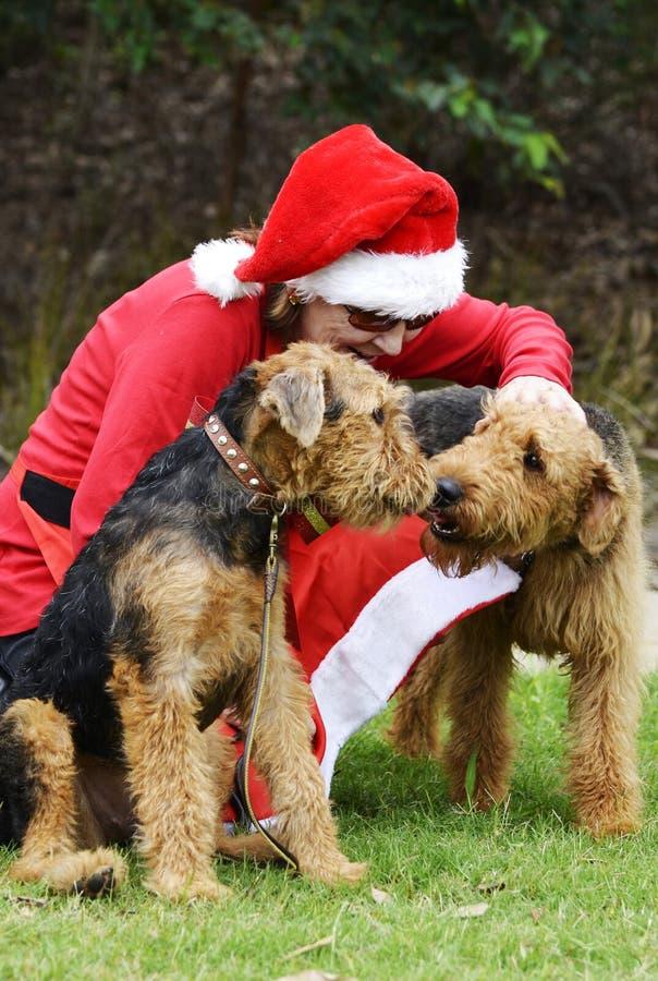 Petite femme des aides de Santa en costume de Santa Claus et deux grands chiens images libres de droits