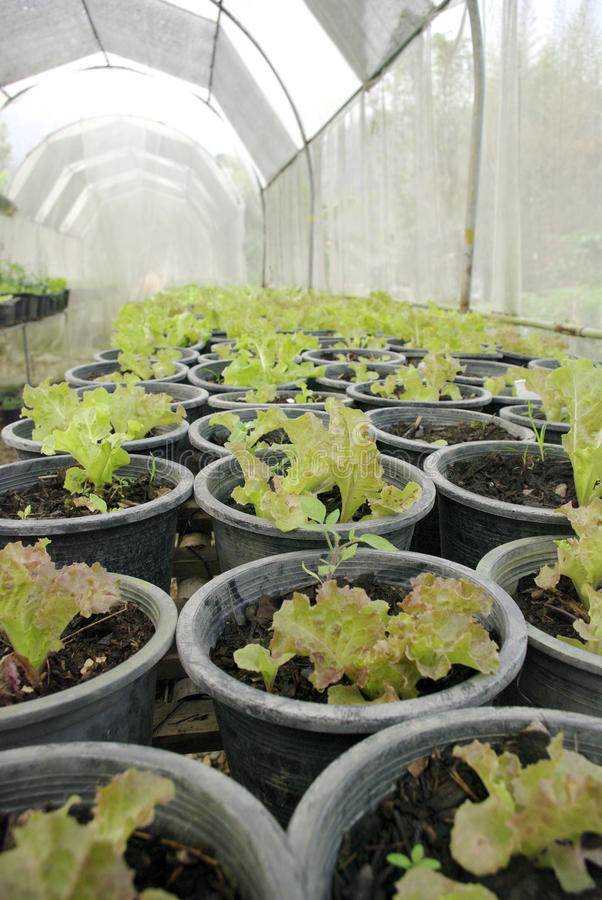 Ferme végétale organique photo stock