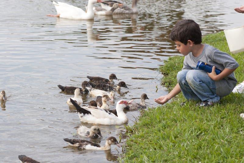 Petite fille à l'étang de canard photos libres de droits
