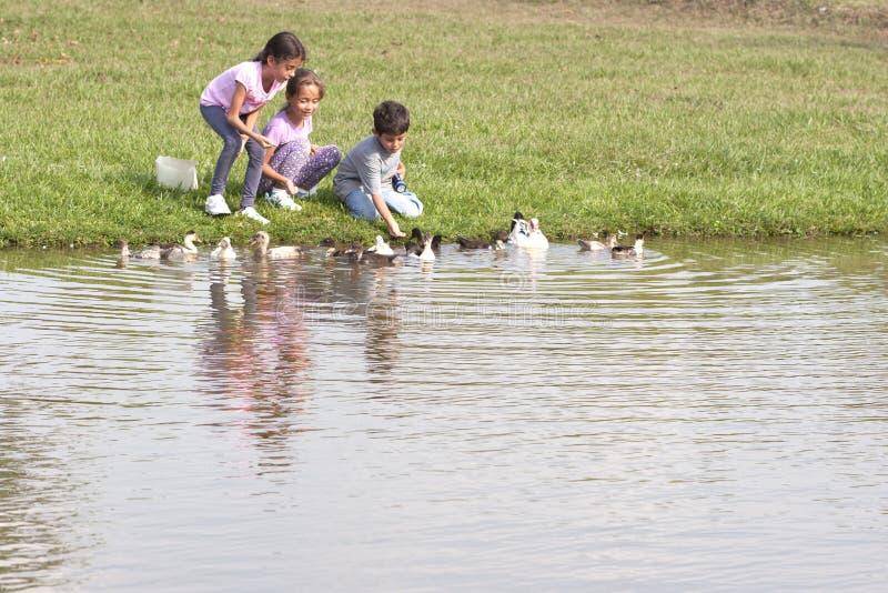 Petite fille à l'étang de canard images stock